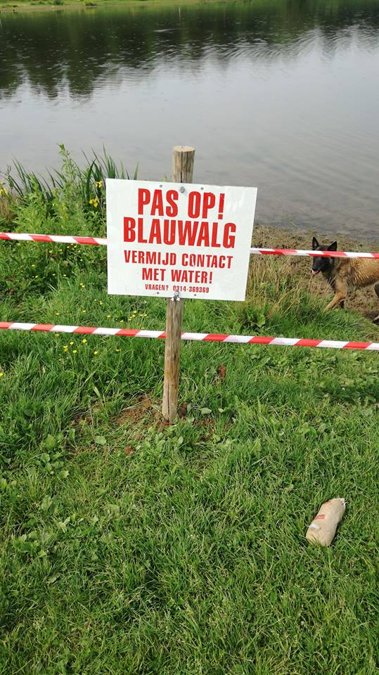 Blauwalg in water Horsterpark