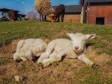 Paaseieren speurtocht op Kinderboerderij Horsterpark