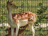 Jonge hertjes geboren in het Horsterpark