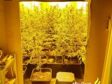 Wietkwekerij met 127 planten aangetroffen